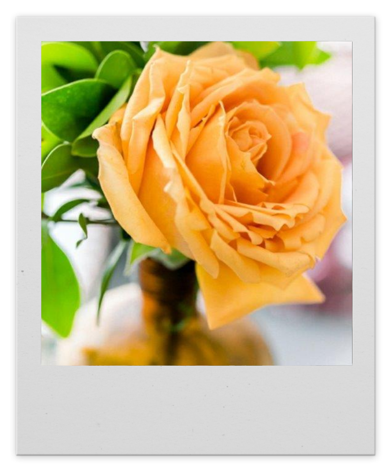 Apricot Coloured Wedding Rose Centerpiece
